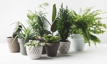 観葉植物で爽やか&洗練された雰囲気を演出