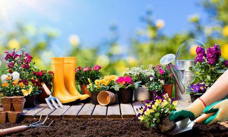 2.植物の成長に癒されるガーデニング・家庭菜園