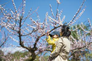 穴場発見!子連れで桜を楽しめる都内近郊の花見スポット4選